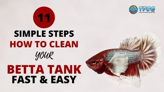 How To Clean A Betta Fish Tank How Often The Easy Steps To Follow