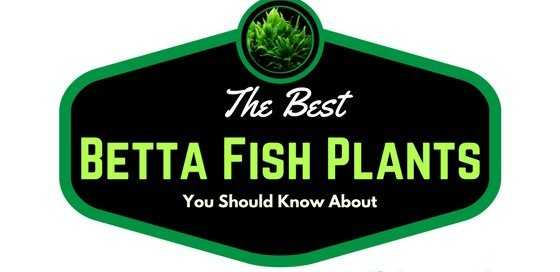 The Best Betta Fish Plants You Should Know About (1)