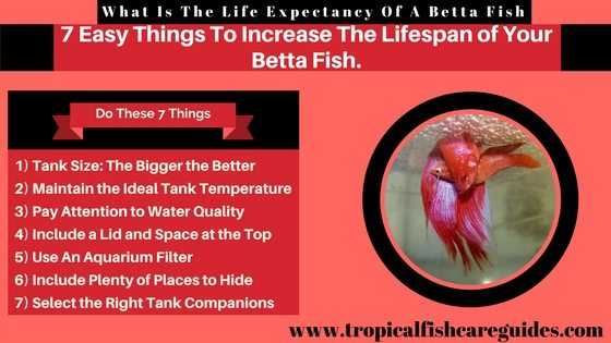 What Is The Life Expectancy Of A Betta Fish & 7 Easy Things You Can Do To Increase The Lifespan of Your Betta Fish.