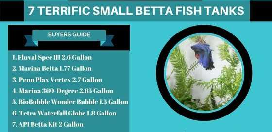 7 Terrific Small Betta Fish Tanks Your Betta Will Love