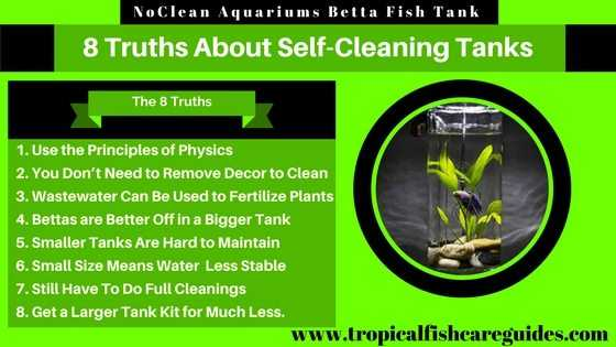NoClean Aquariums Betta Fish Tank & 8 Truths About Gravity Flow Self-Cleaning Tanks