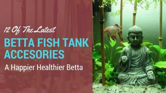 The Latest Betta Fish Tank Accessories