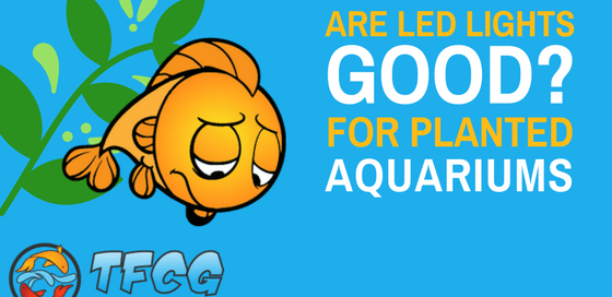 LED Aquarium Lighting- Are LED Lights Good For Aquarium Plants- (1)