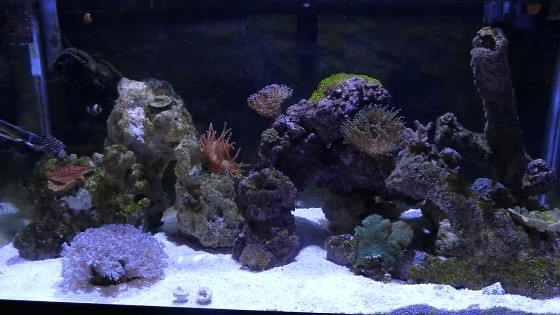 Growing Coral With LED Lights