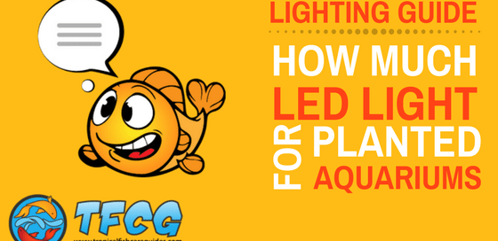 LED Aquarium Lighting- How Much LED Light For A Planted Aquarium-