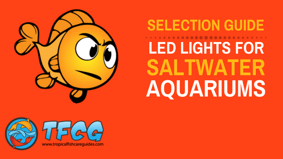 Reef Lighting Guide- Selecting LED Lights For Saltwater Aquariums (1)