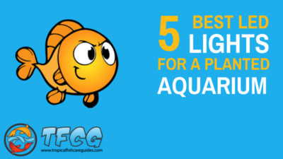 5 Of The Best LED Lights For Planted Freshwater Aquariums