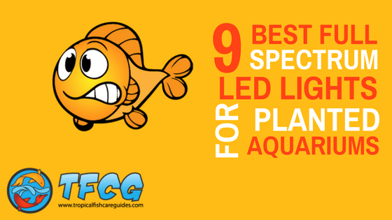 9 of the best full spectrum led lights for planted aquariums 2019