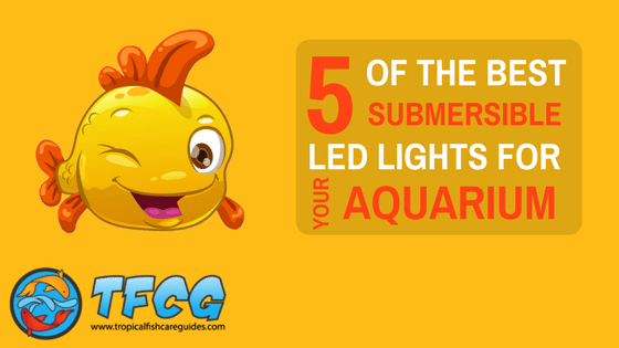5 best submersible led lights for your aquarium 2019 reviews