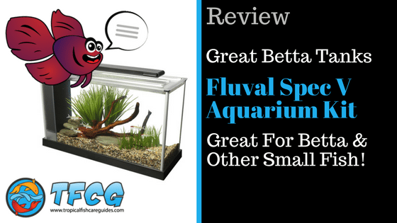 Betta Fish Tank Review- The Fluval Spec V Aquarium Kit - Great For Betta & Other Small Fish!