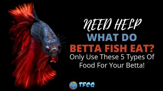 What do Betta Fish Eat - Food For Betta Fish