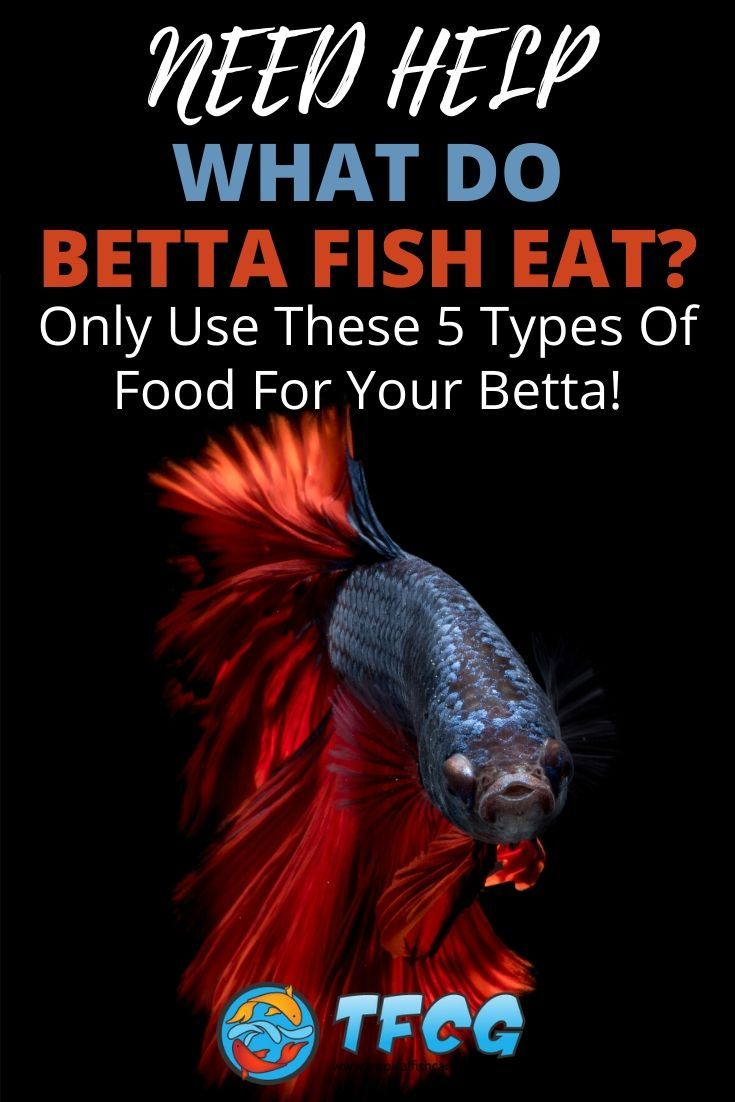 What do Betta Fish Eat - Only Use These Best Types Of Betta Food