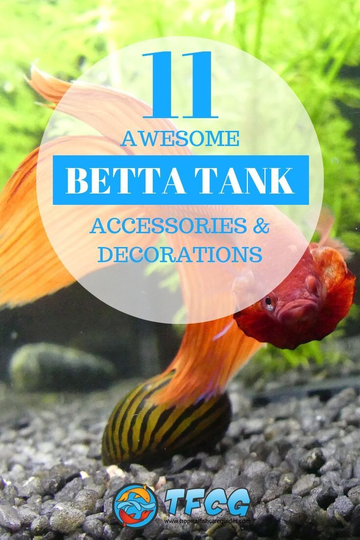 11 Awesome Betta Fish Tank Accessories
