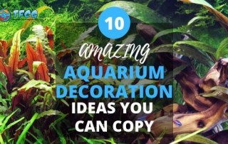 Amazing Fish Tank Decoration Ideas You Can Copy