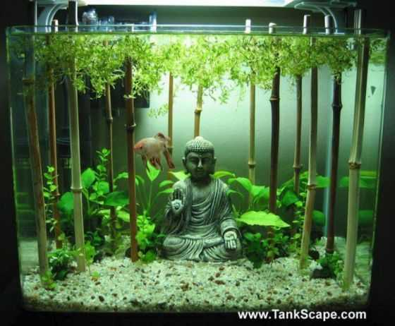 Aquarium Decoration Ideas - Bam-Buddha Forest