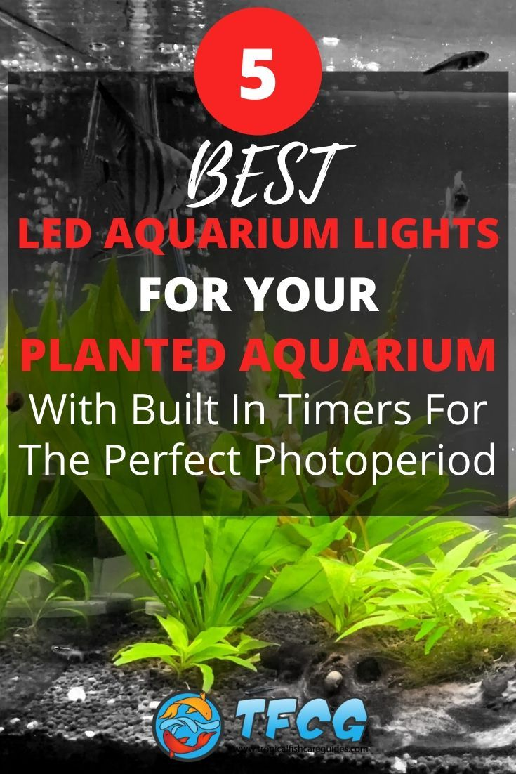 Best LED Aquarium Light With Built In Timer For Your Planted Freshwater Aquariums