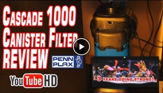Best canister filter - cascade 1000
