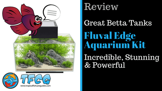 Betta Fish Tank Review- The Fluval Edge Aquarium (6 & 12 Gallons)