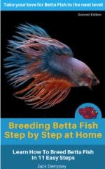 Breeding Betta Fish Cover
