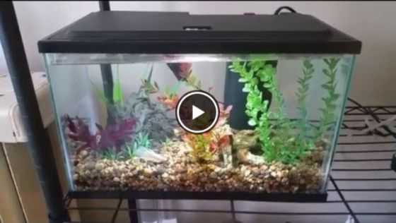 Different Betta Fish Tank Size Options Video