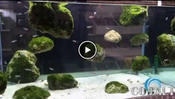 Fish Tank Decor Ideas - Floating Rock_Planet Fish Tank