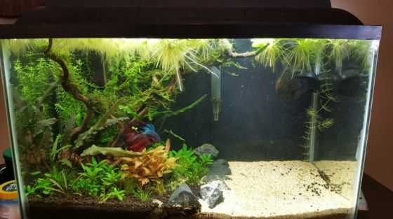 Fish Tank Decoration Ideas - Beach to Jungle