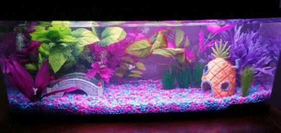 Fish Tank Ideas - Blue and Pink Spongebob Paradise