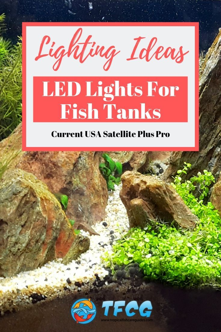 Fish Tank Lighting Ideas Current USA Satellite LED Plus Pro