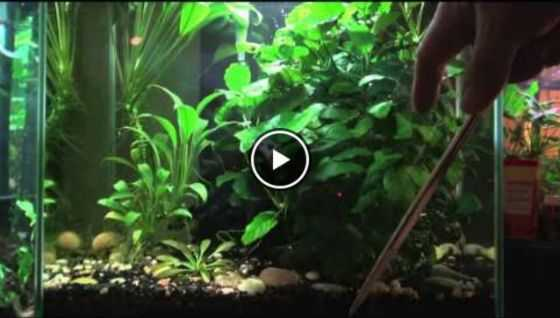 how much led light for a planted tank great beginner plants video