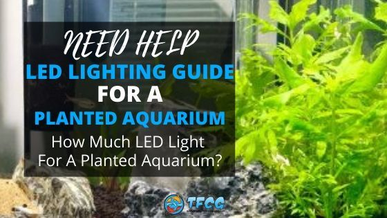 Planted Aquarium LED Lighting Guide - how much light do aquarium plants need