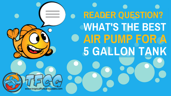 What's The Best Air Pump For A 5 Gallon Tank_