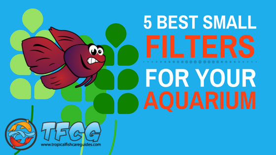 Top 5 Best Small Fish Tank Filters For Your Money