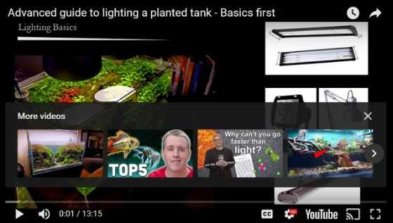 guide to lighting a planted tank