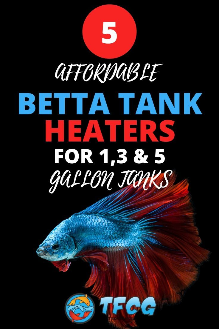 Affordable Betta Tank Heater For 1, 5 and 10 Gallon Betta Tanks