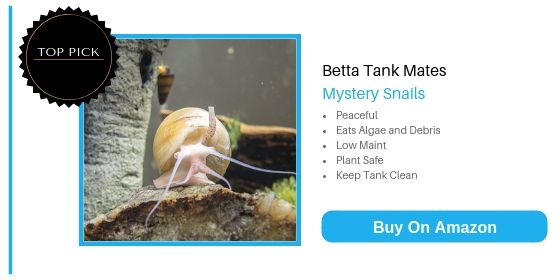 Betta Tank Mates: Huge List Of 29 Fish That Can Live With