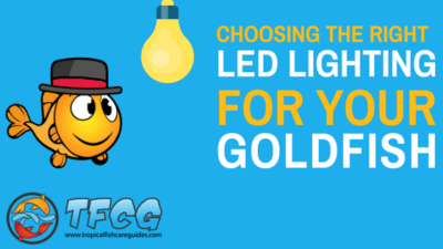 Choosing The Proper LED Lighting For Your Goldfish Aquarium