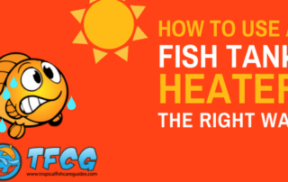 How To Use A Fish Tank Heater - Install, Set Up & Regulate Your Heater
