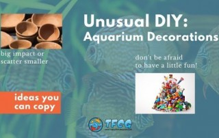 Aquarium decoration ideas you can copy