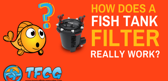 Tfcg the only tropical fish resource you will ever need for How does a fish finder work