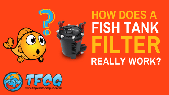 How Does a Fish Tank Filter Work_