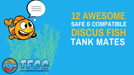 The Best Discus Tank Mates Compatibility List and Care Guide