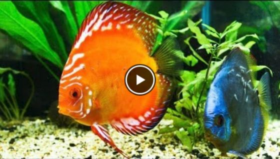 how to lower ammonia in fish tank video