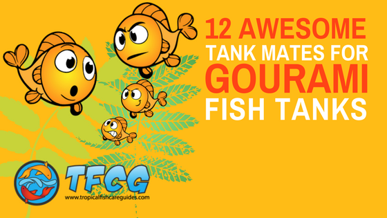 The Best Gourami Fish Tank Mates [Massive List & Care Guide]