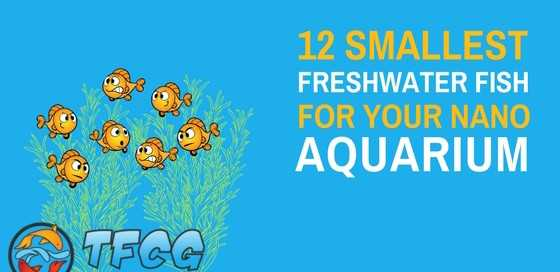 Smallest Freshwater Aquarium Fish For Your Nano Tank