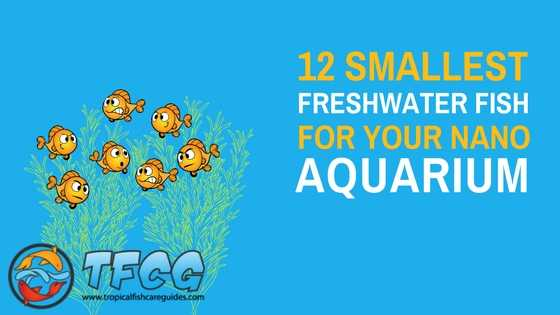 12 Of The Smallest Freshwater Aquarium Fish For Your Nano Tank List