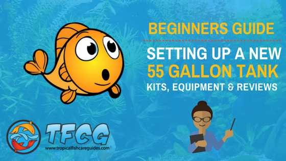 55 Gallon Fish Tank_ Kits, Equipment, Reviews & Set Up [Beginners Guide]