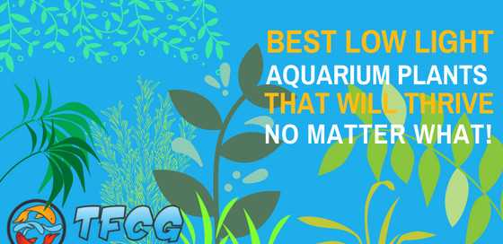Best Low Light Aquarium Plants That Will Thrive No Matter What!