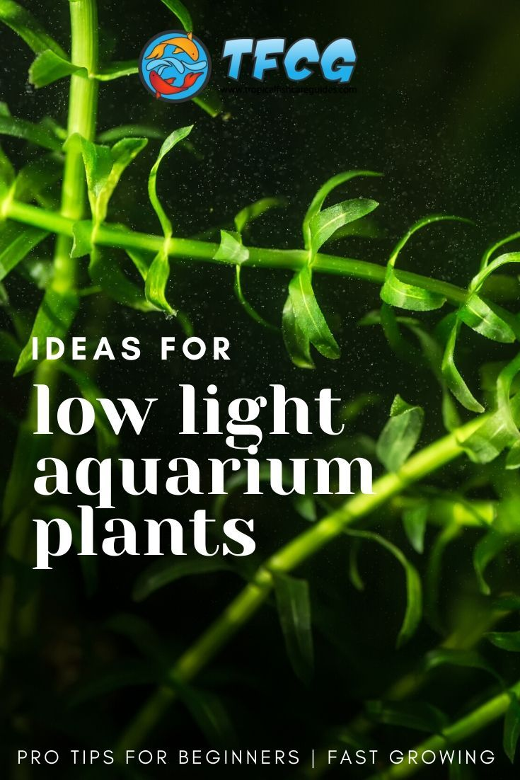 Easy Low Light Carpet Plants For Beginner Aquariums _ Fast Growing