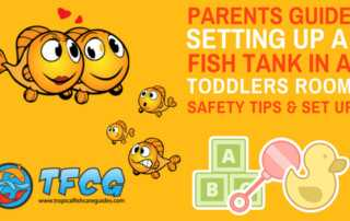 Parent's Guide_ Fish Tank In A Toddlers Room - Safety Tips, Set Up & Recommendations