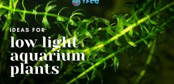 The Best Low Light Aquarium Carpet Plants That Are Easy To Grow [Guide For Beginners]